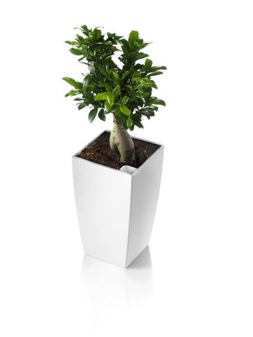 blumenk bel wei f r verschiedenartige pflanzen hervorragend geeignet. Black Bedroom Furniture Sets. Home Design Ideas